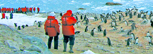 Antarctica Penguins Photographer