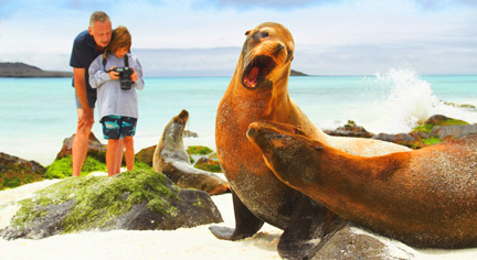 Galapagos Seals On Beach LB
