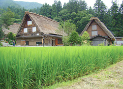 Japan Gassho-zukuri at Shirakawa