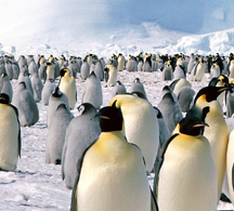 Antarctica - South America travel