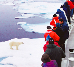 Arctic Expedition Polar Bear from Ship