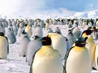 Top Ten Winter Destinations Antarctica