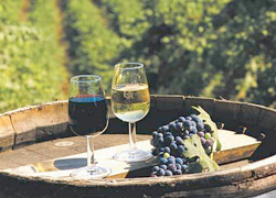 USA Wine Tour wine glasses